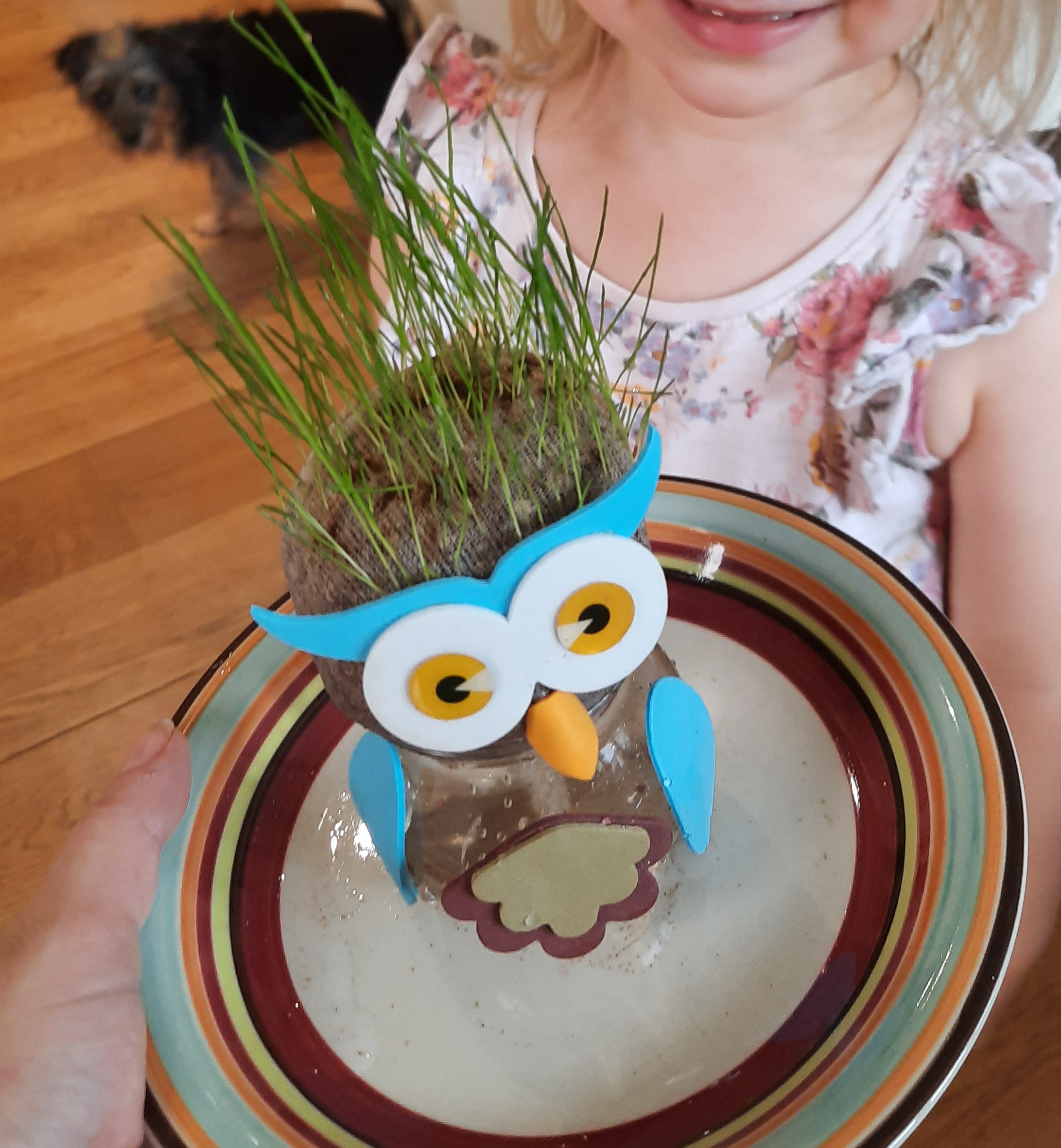 Review: Tobar Owl Grasshead